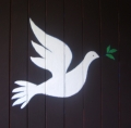 a dove on sister Joan's door -